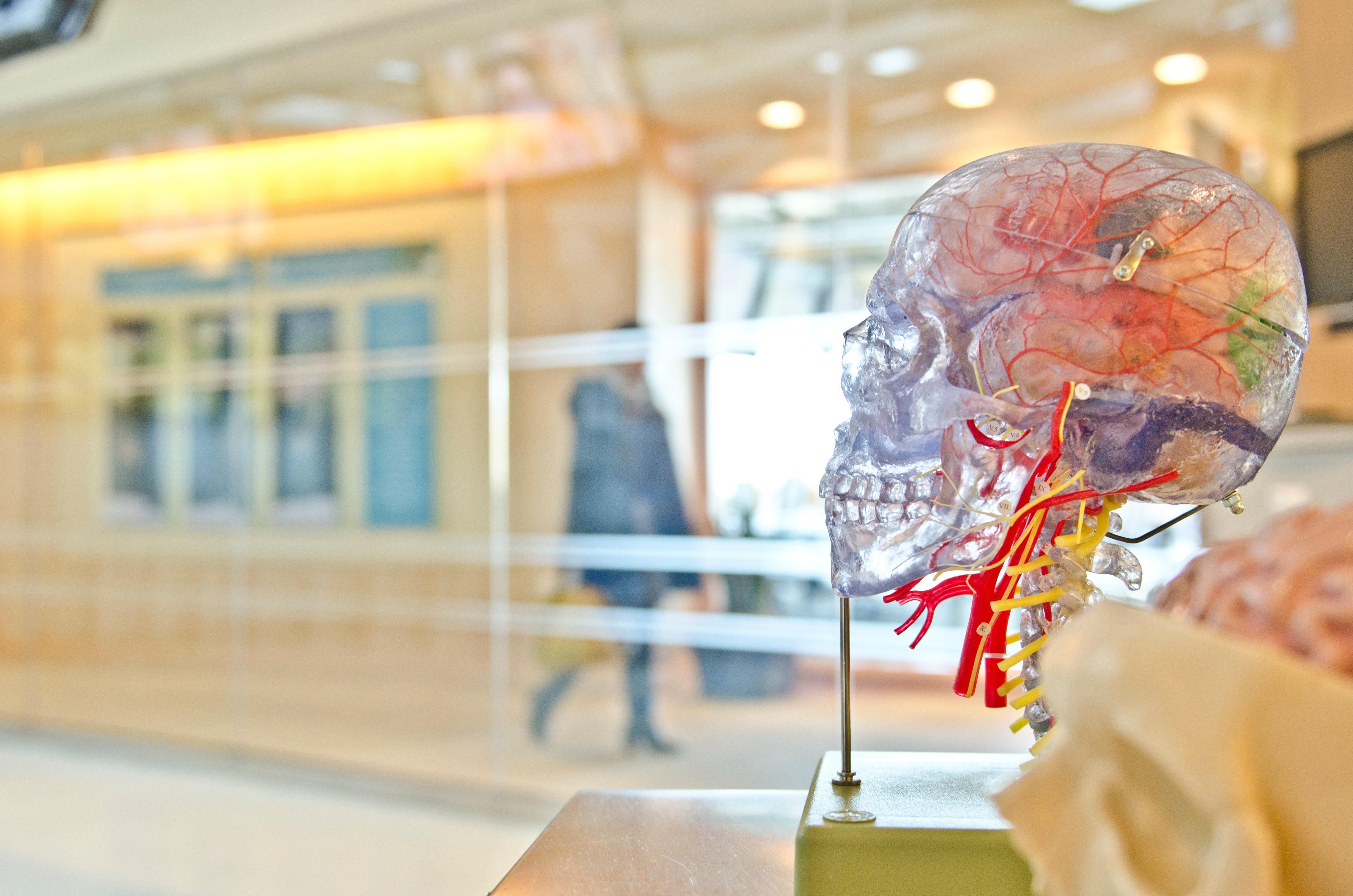 So killt Cortisol deine Neuronen im Gehirn!